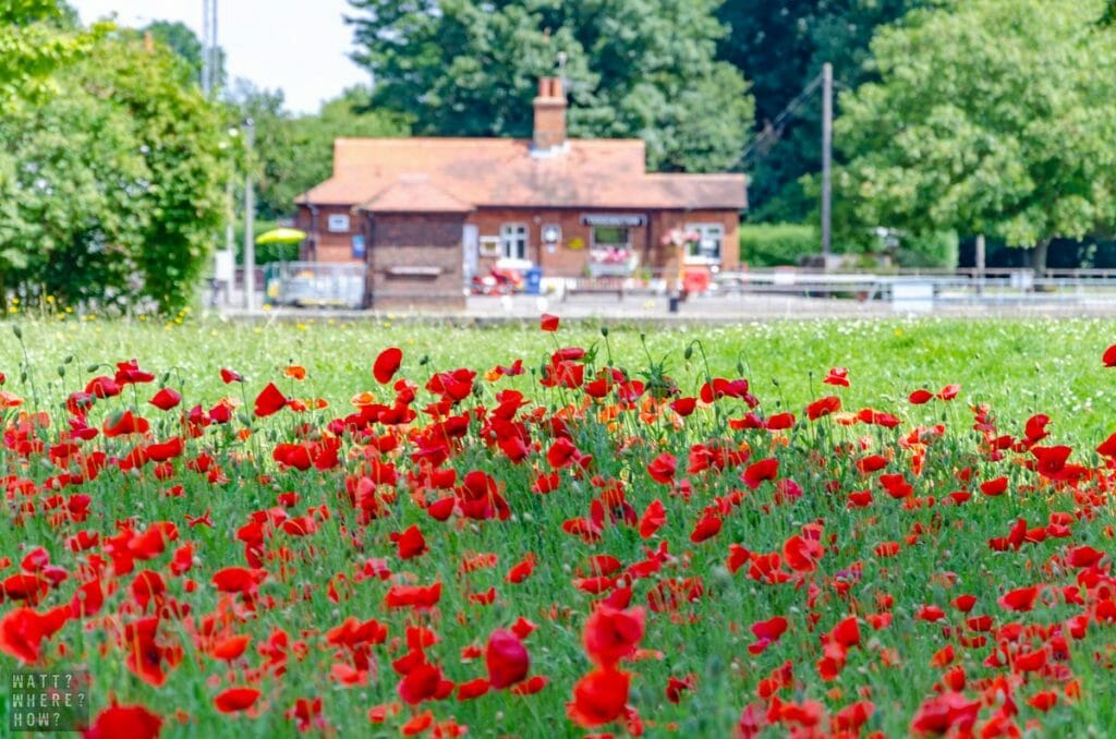 The Fish Slapping Dance was shot across from this beautiful field of red poppies.