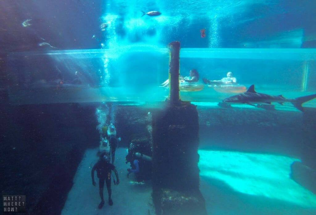 At Atlantis Paradise Island resort, you can swim with sharks or at least walk amongst them